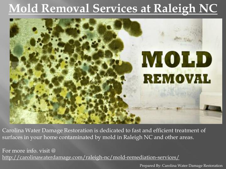Mold Removal Services at Raleigh NC
