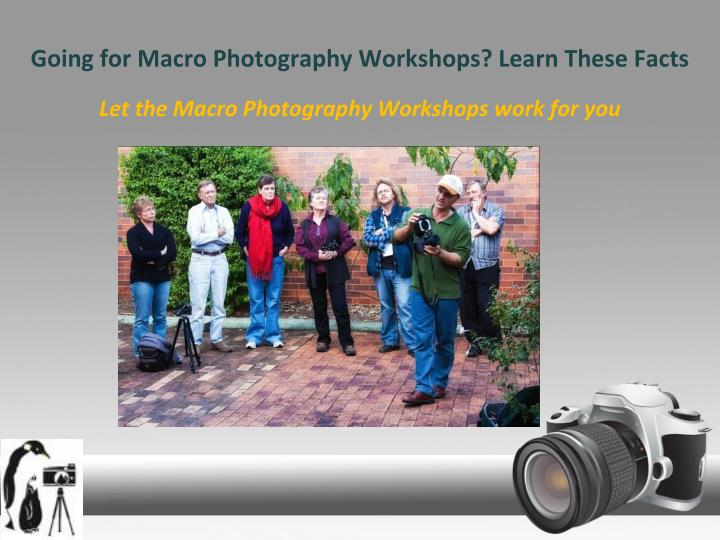 Going for macro photography workshops learn these facts