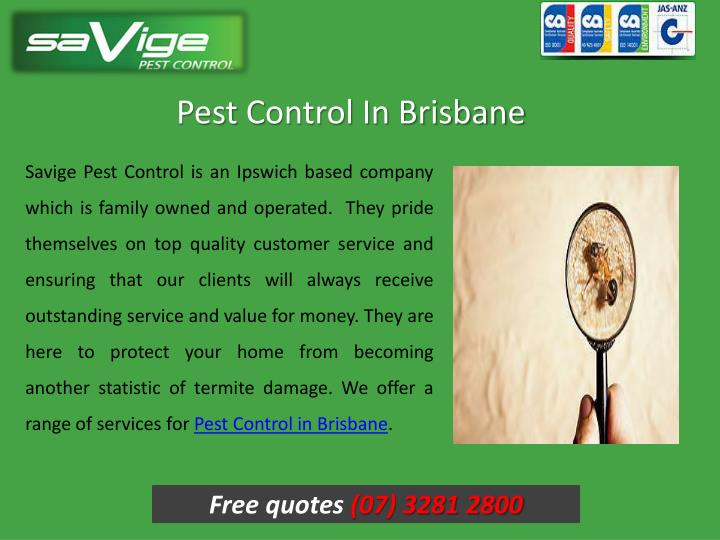 Pest c ontrol in brisbane