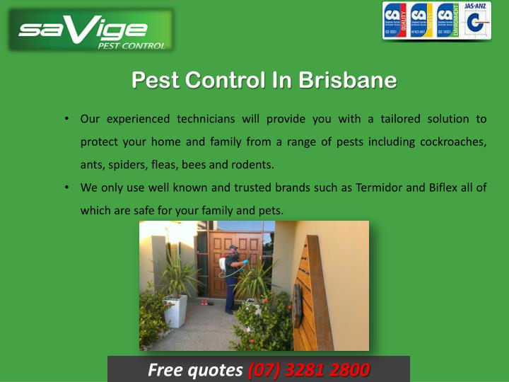 Pest Control In Brisbane