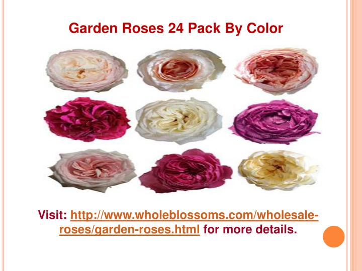 Garden Roses 24 Pack By