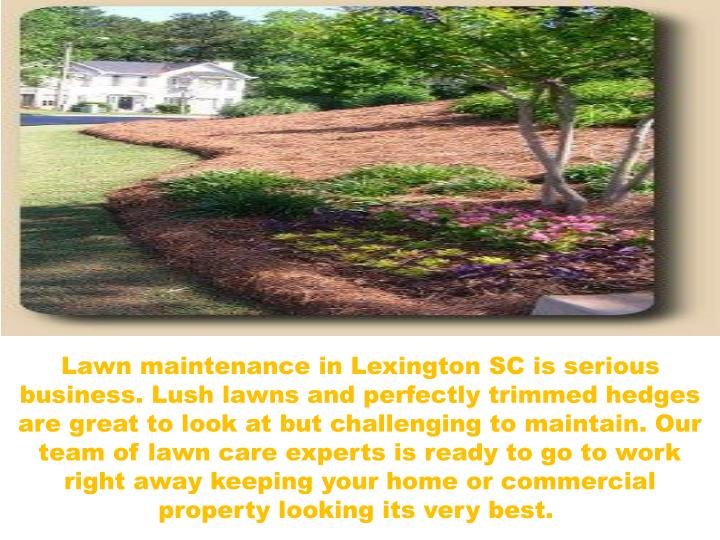 Lawn maintenance in Lexington SC is serious business. Lush lawns and perfectly trimmed hedges are gr...