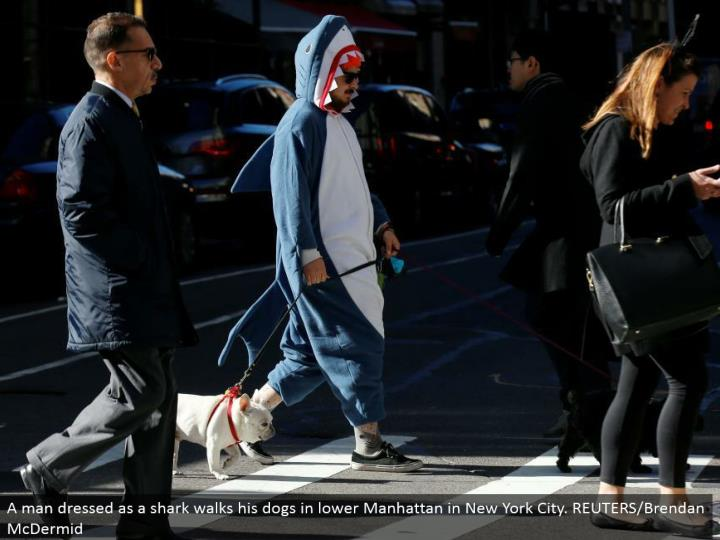 A man dressed as a shark strolls his puppies in lower Manhattan in New York City. REUTERS/Brendan McDermid