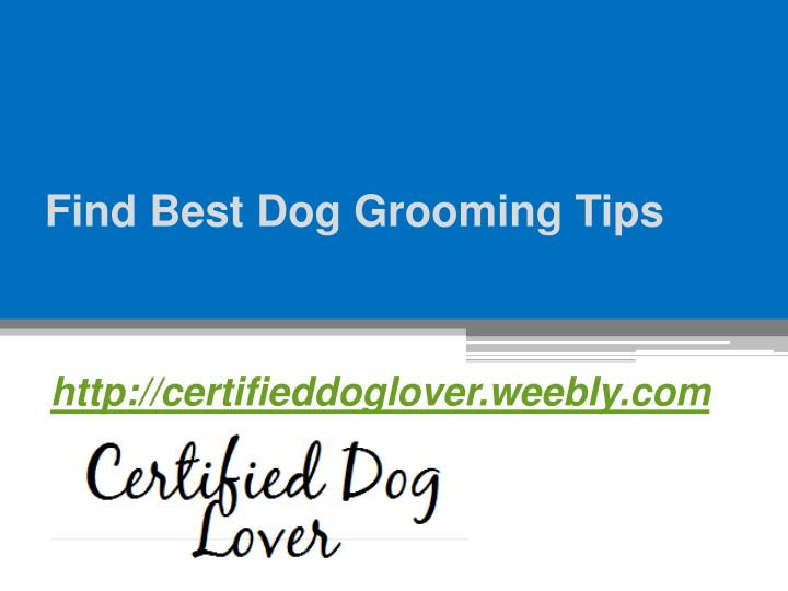 Find best dog grooming tips