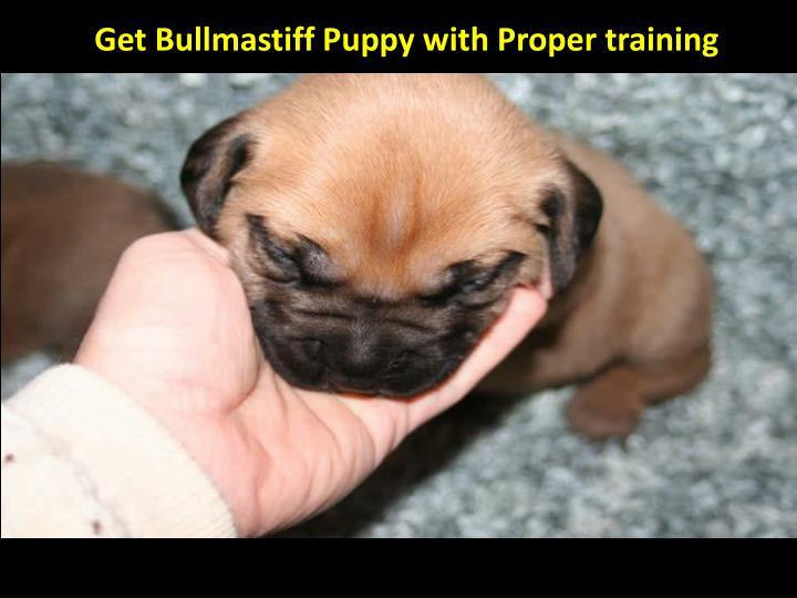 Get Bullmastiff Puppy with Proper training