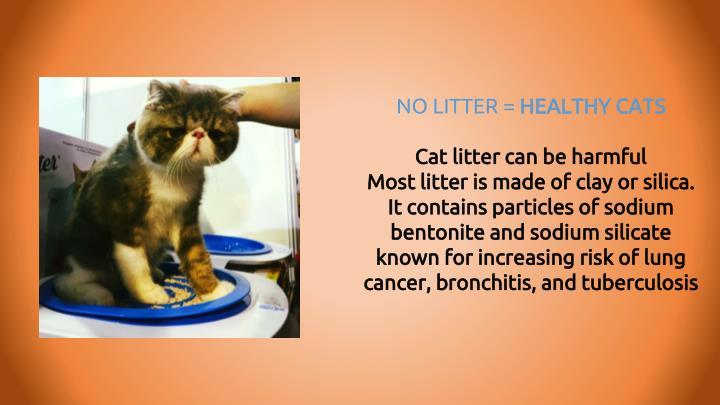 NO LITTER =