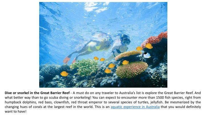 Dive or snorkel in the Great Barrier Reef