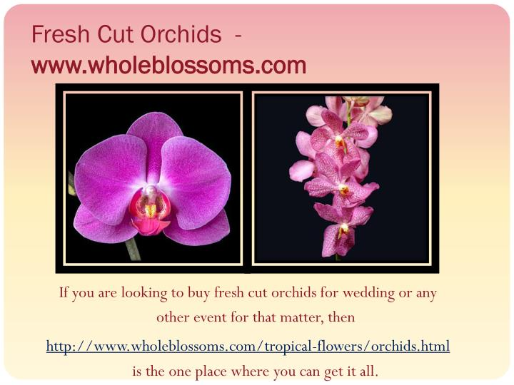 Fresh Cut Orchids