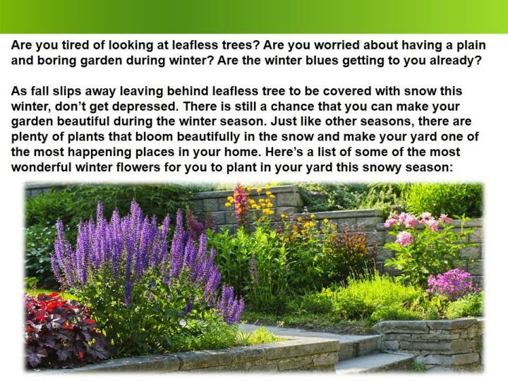 5 garden plants that will not fall in your absence 7433370