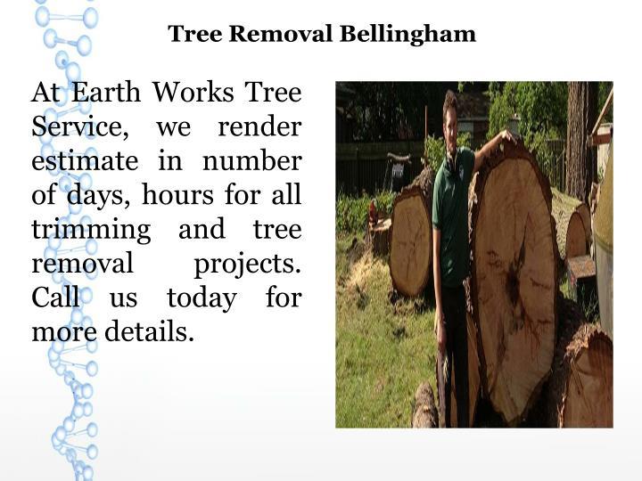 Tree Removal Bellingham