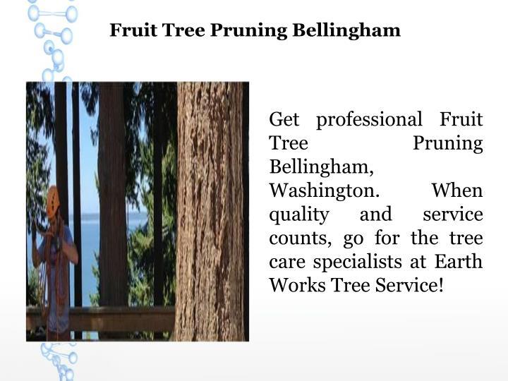 Fruit Tree Pruning Bellingham