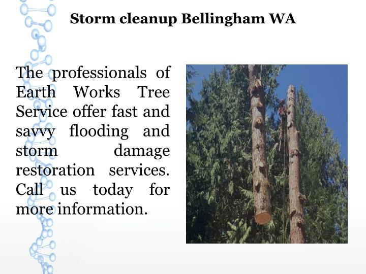 Storm cleanup Bellingham WA