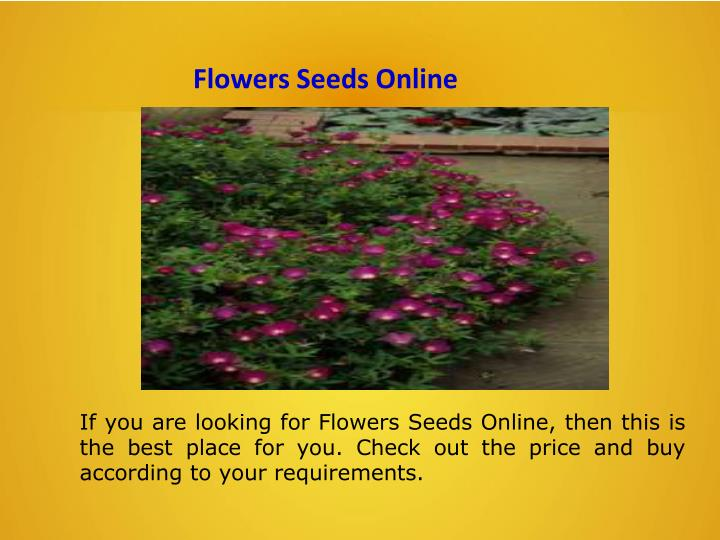 Flowers Seeds Online