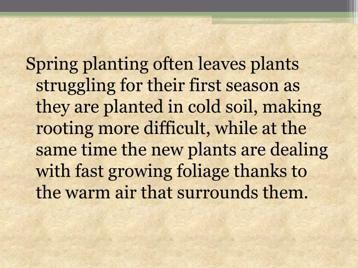 Spring planting often leaves plants struggling for their first season as they are planted in cold soil, making rooting more difficult, while at the same time the new plants are dealing with fast growing foliage thanks to the warm air that surrounds them