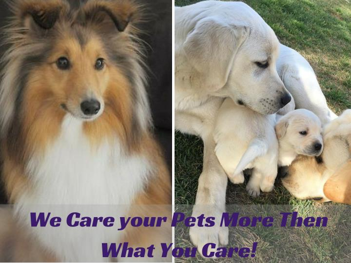 We Care your Pets More Then
