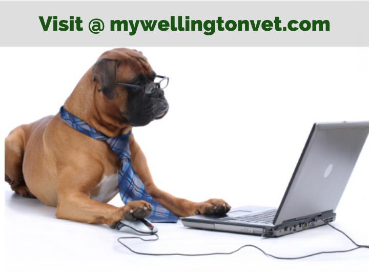 Visit @ mywellingtonvet.com