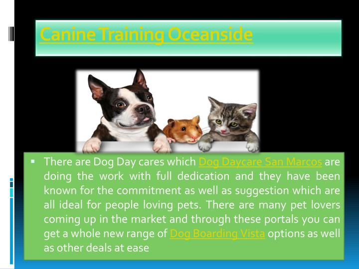 Canine Training Oceanside
