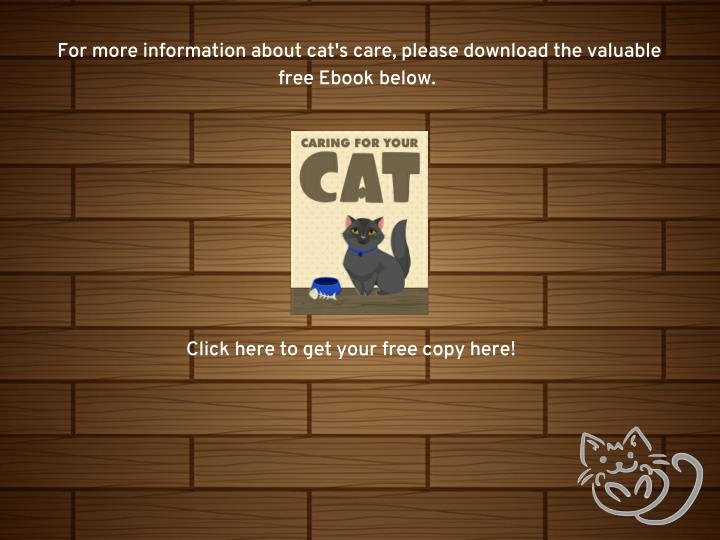For more information about cat's care, please download the valuable