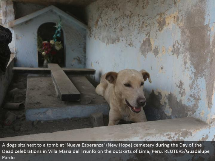 A puppies sits alongside a tomb at 'Nueva Esperanza' (New Hope) burial ground amid the Day of the Dead festivals in Villa Maria del Triunfo on the edges of Lima, Peru. REUTERS/Guadalupe Pardo