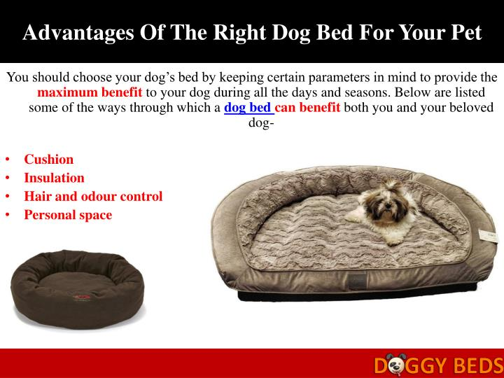 Advantages Of The Right Dog Bed For Your Pet