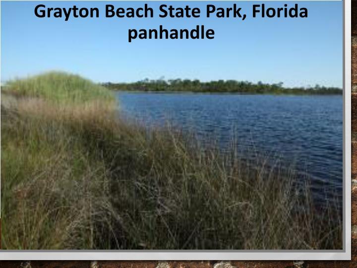 Grayton Beach State Park, Florida panhandle