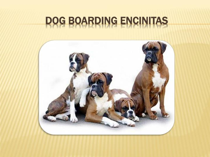Dog boarding encinitas