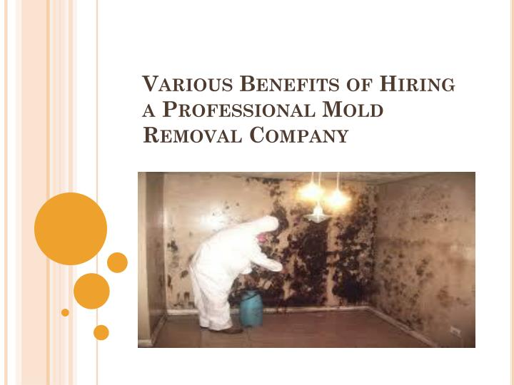 Various benefits of hiring a professional mold removal company