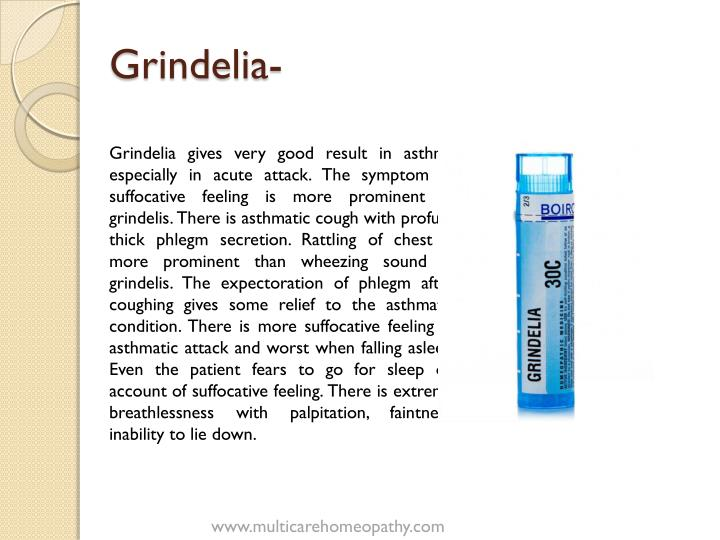 Grindelia-