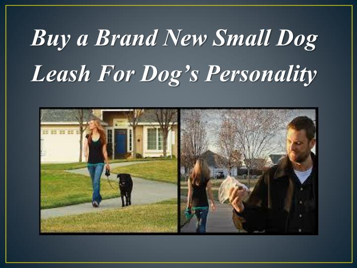 Buy a Brand New Small Dog Leash For
