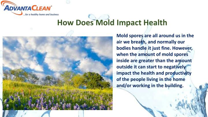 How Does Mold Impact Health