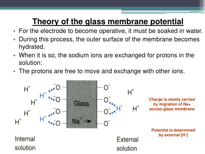 Theory of the glass membrane potential