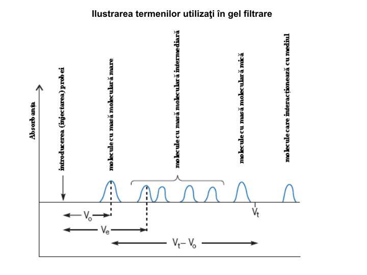 Ilustrarea termenilor utilizaţi în gel filtrare