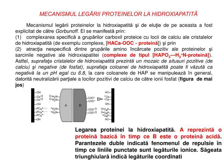 MECANISMUL LEGĂRII PROTEINELOR LA HIDROXIAPATITĂ