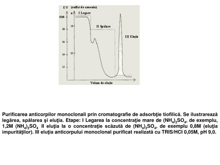 Purificarea anticorpilor monoclonali prin cromatografie de