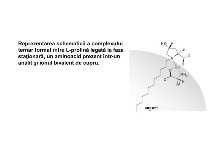 Reprezentarea schematică a complexului