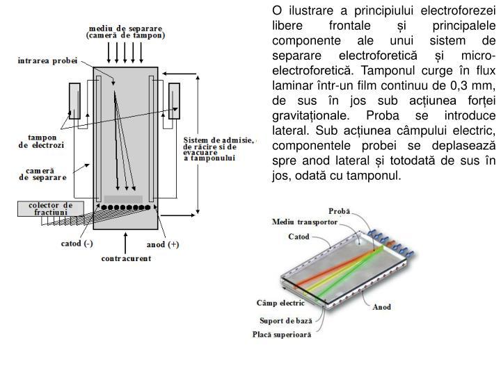 O ilustrare a principiului electroforezei