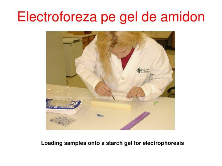 Electroforeza pe gel de amidon