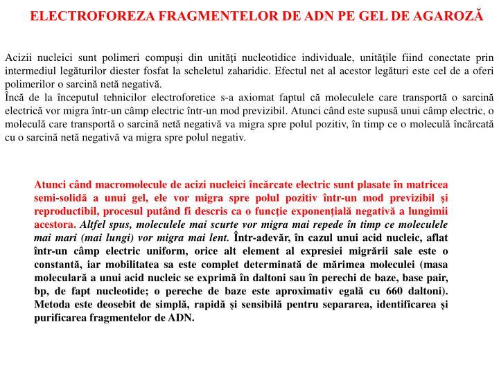 ELECTROFOREZA FRAGMENTELOR DE ADN PE GEL DE AGAROZĂ