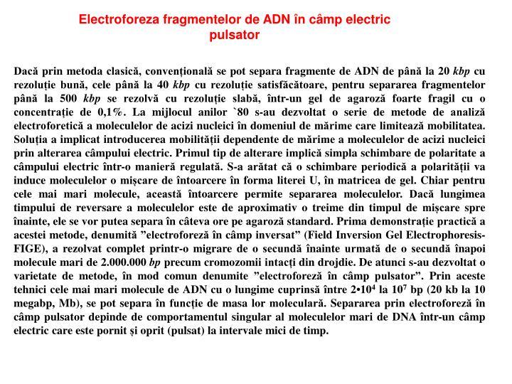 Electroforeza fragmentelor de ADN în câmp electric
