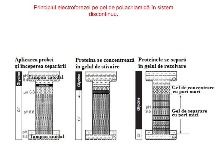 Principiul electroforezei pe gel de poliacrilamidă în sistem