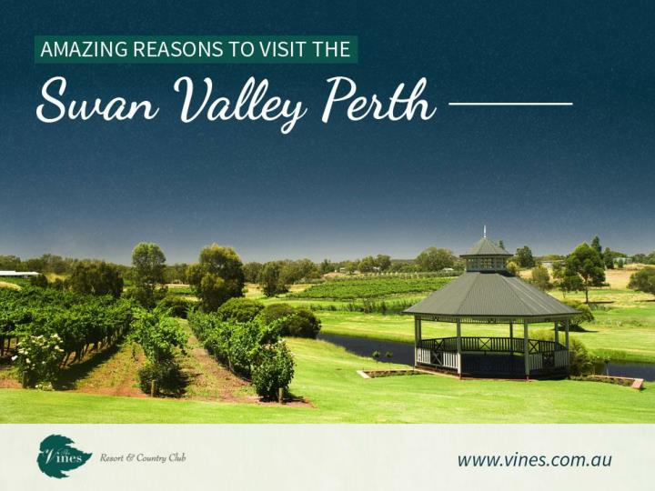 Amazing reasons to visit the swan valley perth
