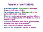 animals of the tundra