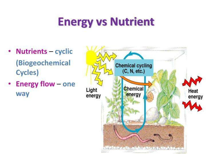 Energy vs Nutrient