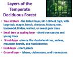 layers of the temperate deciduous forest