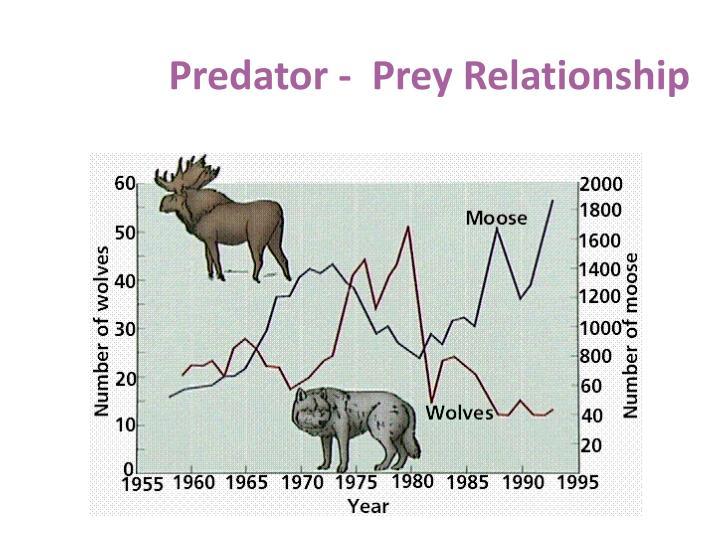 Predator -  Prey Relationship