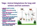 taiga animal adaptations for long cold winters and hot summers
