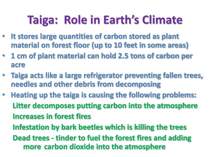 Taiga:  Role in Earth's Climate