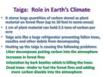 taiga role in earth s climate