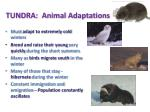 tundra animal adaptations