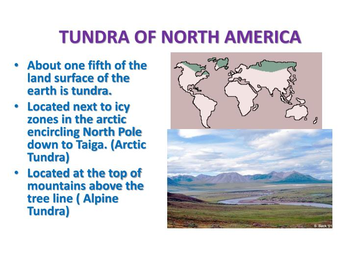TUNDRA OF NORTH AMERICA